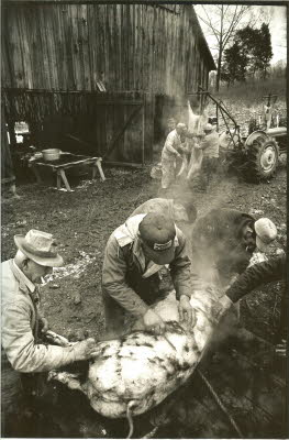 "Bill Litchfield, Clarence Litchfield and Troy  ""Spike"" Cunningham, Dale Ladd scraping the hair off the hog. In the background, another crew guts another hog, Dots Litchfield closest to the barn."