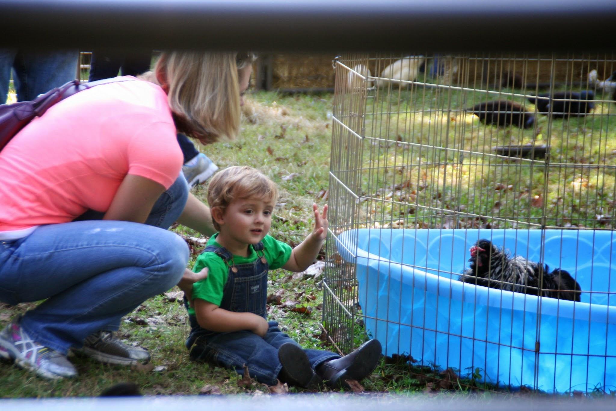 petting-zoo-10