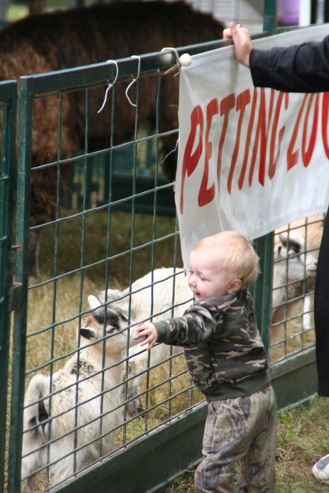 petting-zoo-14